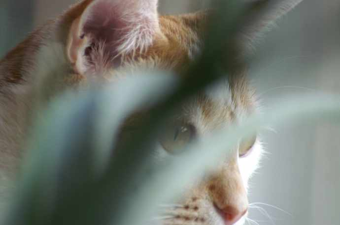 Kot i roślinki
