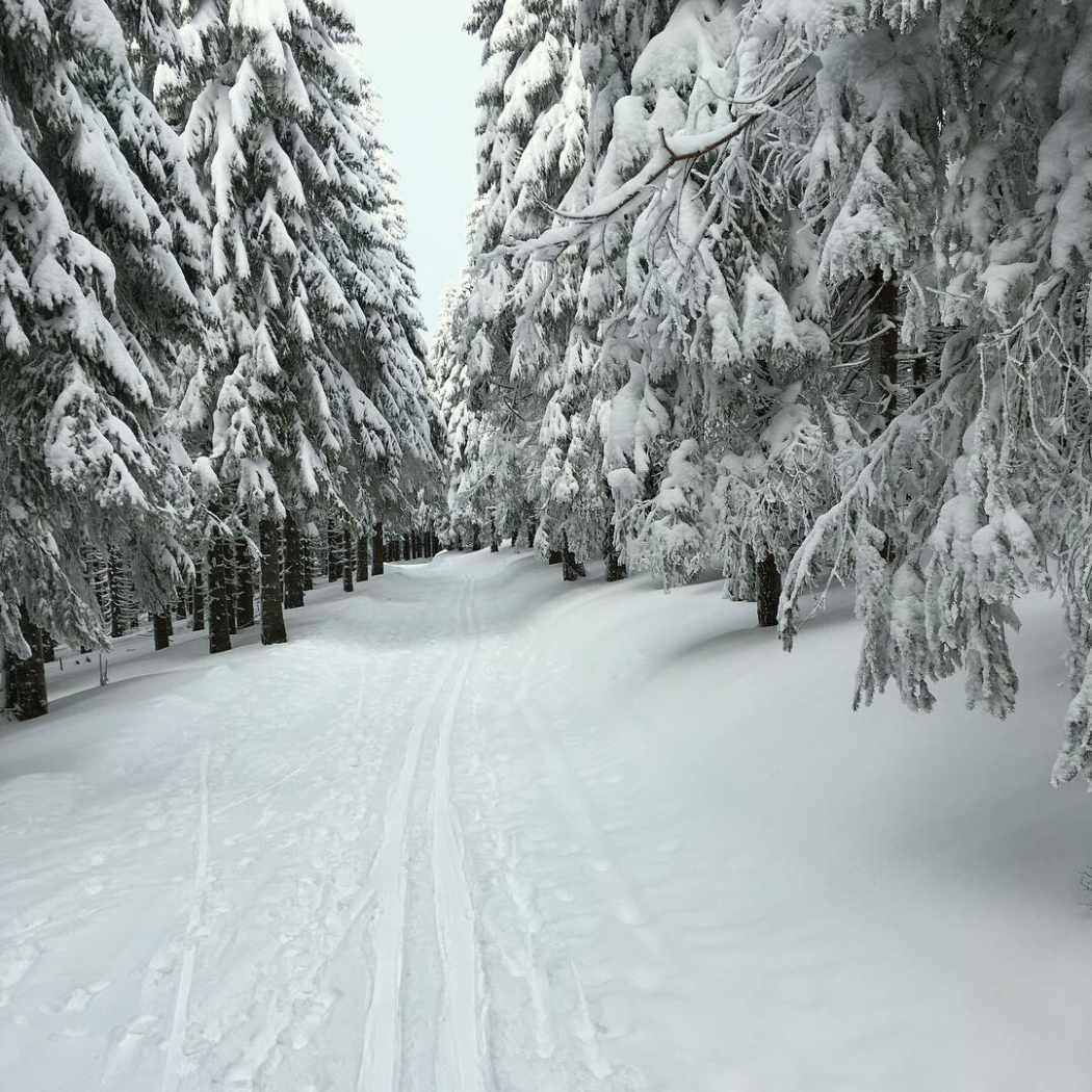 Trasa biegowa wzdłuż granicy polsko-czeskiej