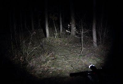 Lampka rowerowa w lesie