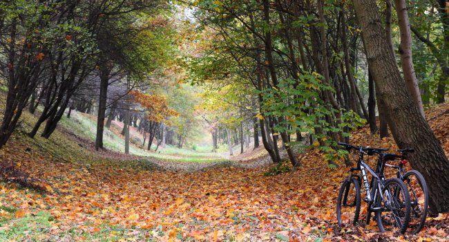 droga-rowerowa-wsrod-drzew