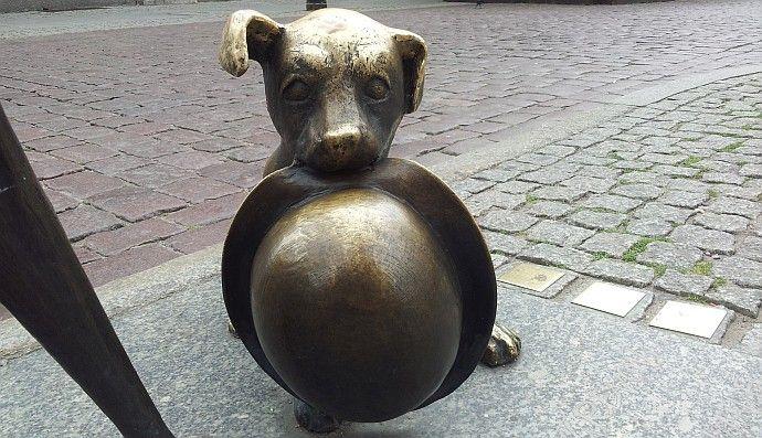 Pies Filuś pomnik Toruń Zwiedzanie