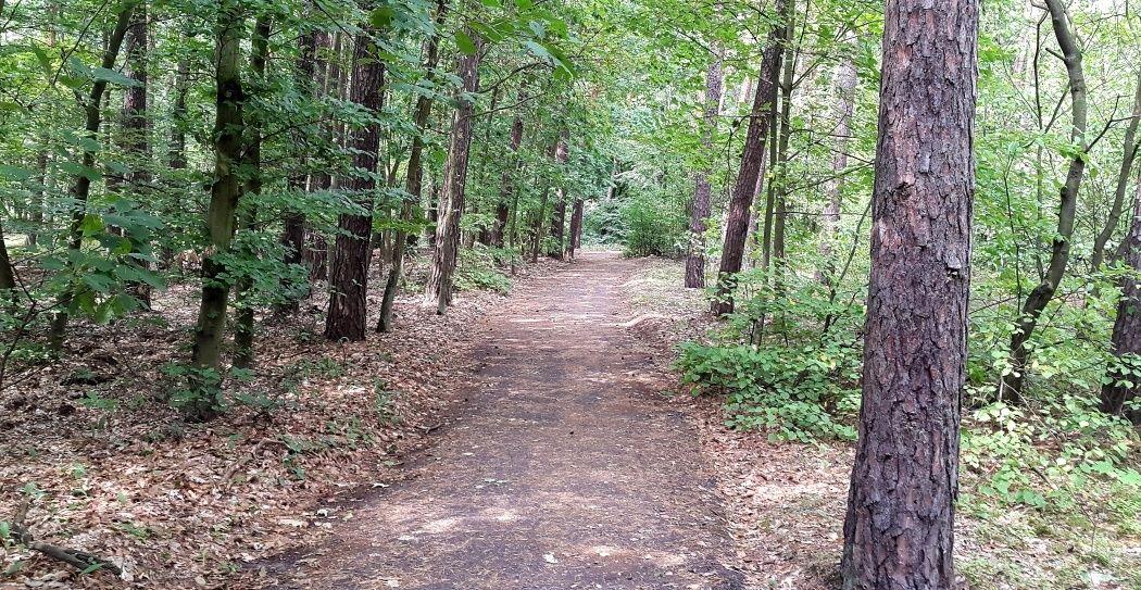 Droga przez las pod Włocławkiem