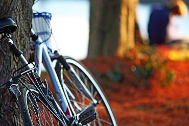 Jaki rower kupić do konkretnej kwoty | Rowerowe Porady